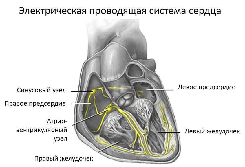 Пропанорм цена от 350 руб, Пропанорм купить в Москве, инструкция по применению, аналоги, отзывы