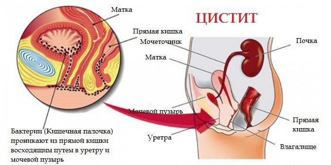 Фуросемид таблетки по 40 мг №50 (10х5): инструкция по применению